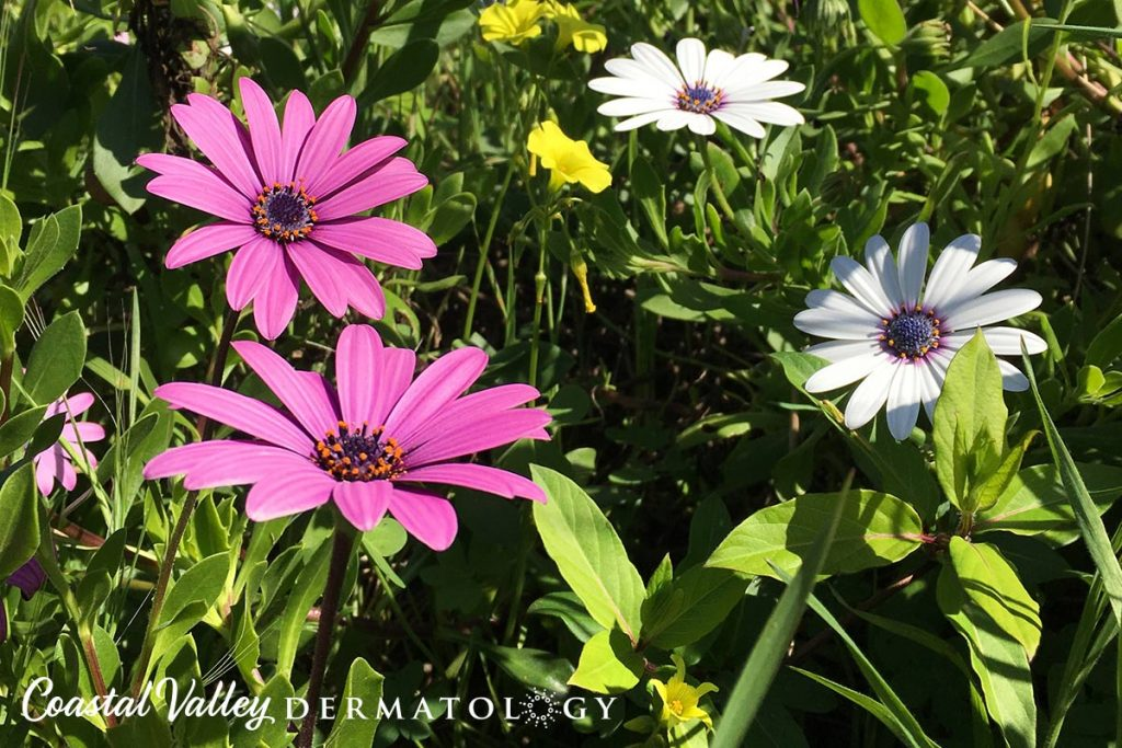 coastal-valley-dermatology-monterey-spring-april-photo