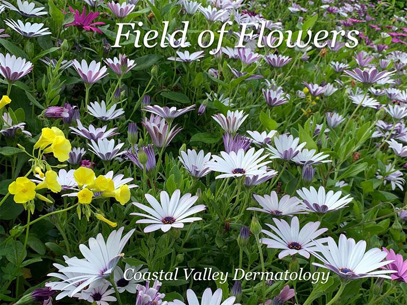 coastal-valley-dermatology-monterey-april-flowers-photo